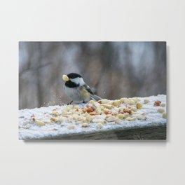 Hungry Chickadee Metal Print