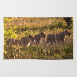 Lions at Tembe elephant park Rug