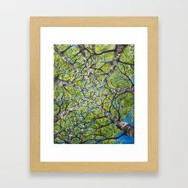 Dizzy Aspens by Melinda Cummings Framed Art Print
