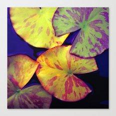 lily pads IIX Canvas Print