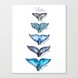 Whale tails Canvas Print