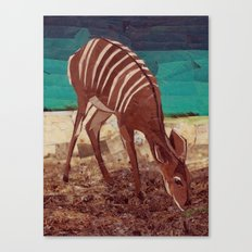 Nyala Canvas Print
