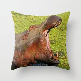 Hippo Boss, Africa wildife Throw Pillow