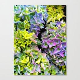 Green purple hydrangea Canvas Print