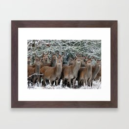 Herd Of Deer Framed Art Print
