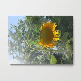 Bowing Sunflower Metal Print