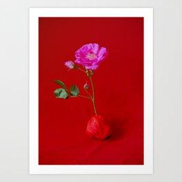 rose/red Art Print