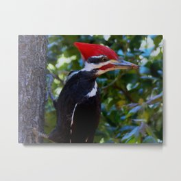 My first Pileated woodpecker! Metal Print