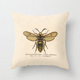 Antique Sesia Apiformis Moth Lithograph Throw Pillow