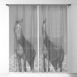 Wild_Horses B & W 3501 - Nevada Sheer Curtain