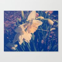 rileigh smirl Canvas Prints featuring Daffodil by Rileigh Smirl