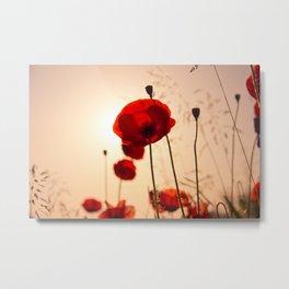 Poppy flower in the sun Metal Print