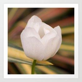 White Tulip against Fall Colors Art Print
