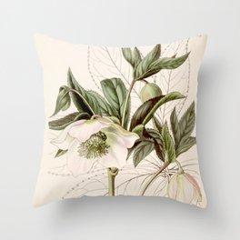 Helleborus orientalis Throw Pillow