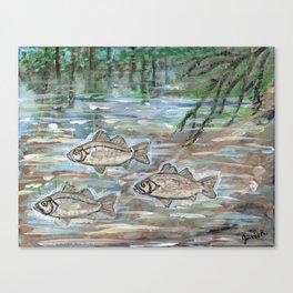 School of White Perch Canvas Print