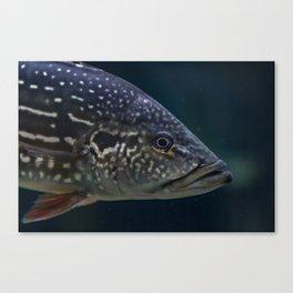 TheFish Canvas Print
