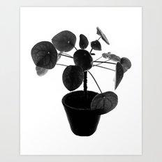 Pilea peperomioides Art Print