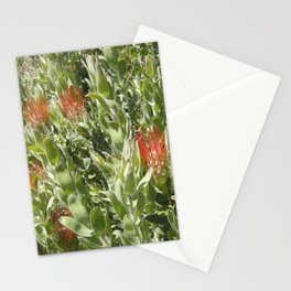 Proteas Stationery Cards