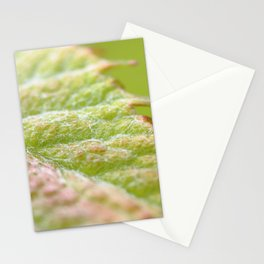 Macro of vine leaf edge Stationery Cards