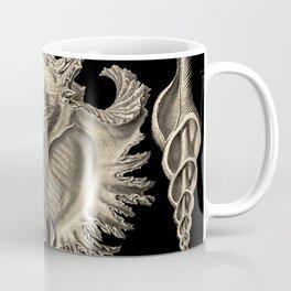 Ernst Haeckel Prosobranchia Sea Shells Coffee Mug