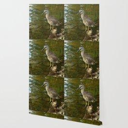 Juvenile Yellow Crowned Night Heron Wallpaper
