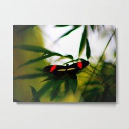 Secret Butterfly Metal Print