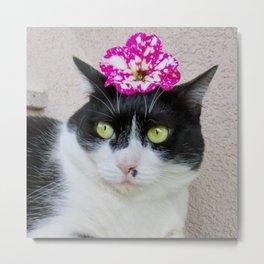 Khoshek sweet kittycat Metal Print