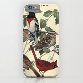 Rose-breasted Grosbeak, Cardinal15 iPhone Case