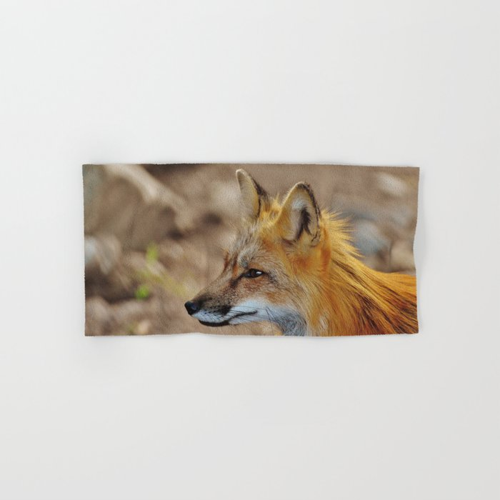 Inquisitive Mr. Fox Hand & Bath Towel