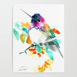 Cute Little Hummingbird Poster