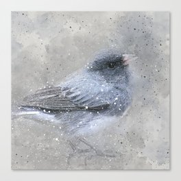 Dark Eyed Junco Bird Canvas Print