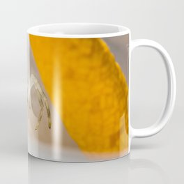 Looking Down Coffee Mug