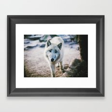 White Wolf Framed Art Print