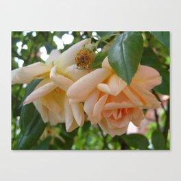 Roses 1 Canvas Print