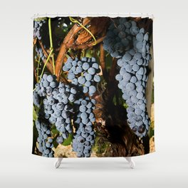 Grapes Vineyard Shower Curtain