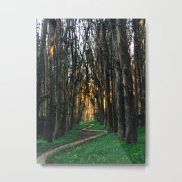 Sunrise in the Woods Metal Print