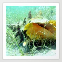 Watercolor Mollusk, Queen Conch 01, St John, USVI, Tranquil Coast Art Print