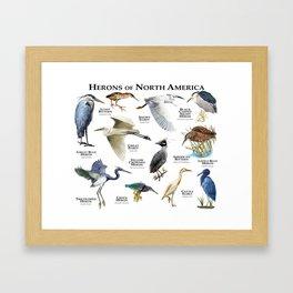 Herons of North America Framed Art Print
