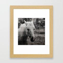 GreyScale Horse Framed Art Print