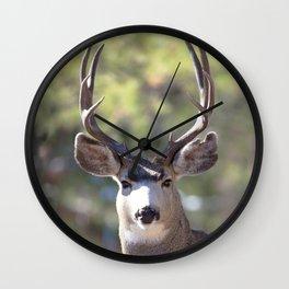 Watercolor Deer, Mule 01, RMNP, The Stare Wall Clock