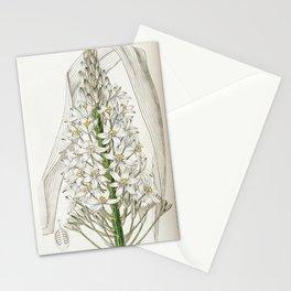 Flower 1978 ornithogalum latifolium Broad leaved Ornithogalum20 Stationery Cards