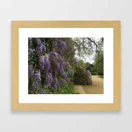 Wisteria at Kenwood Framed Art Print