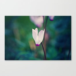 Wild Cyclamen Canvas Print