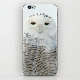 Snowy in the Wind (Snowy Owl 2) iPhone Skin