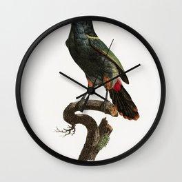 Black-necked Aracari from Histoire Naturelle des Oiseaux de Paradis et Des Rolliers (1806) by Jacque Wall Clock