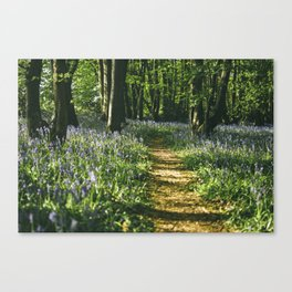 Path through wild Bluebells in ancient woodland. Wayland Wood, Norfolk, UK. Canvas Print