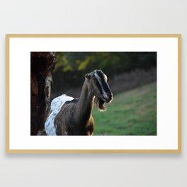 Pippin the Goat Framed Art Print