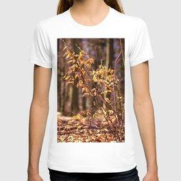 Golden leaves in February T-shirt