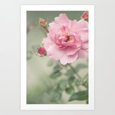 Rose Rainy Day Art Print