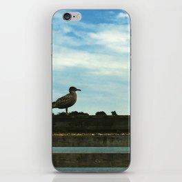 Gull in Profile iPhone Skin